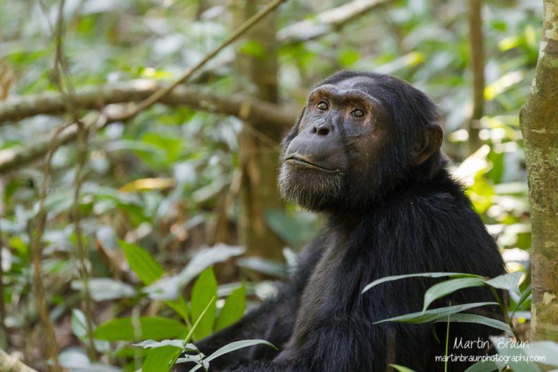 Afrikas Säugetiere