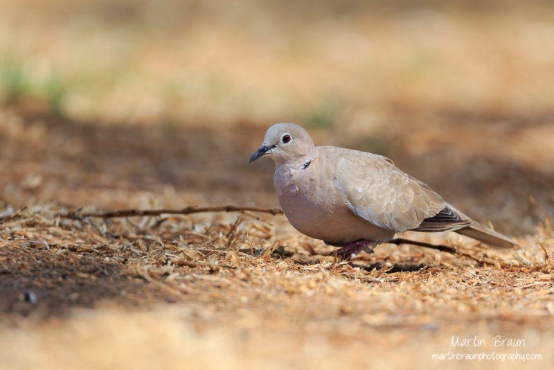 Afrikas Vögel